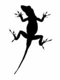Seth's Blog - Lizard